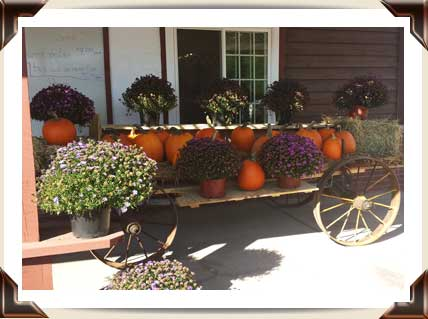Pumpkins and hardy mums.